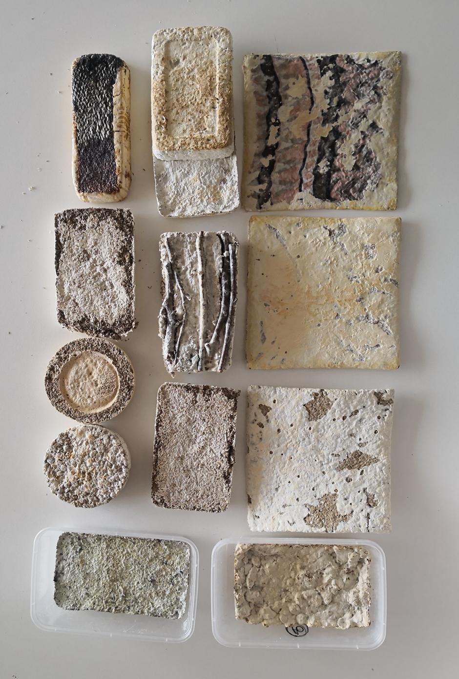 Bio-Fabrication with Mycelium and Kelp